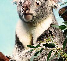 Koala by MelissaSue