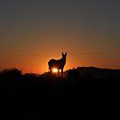 Dusk donkey by Karen01