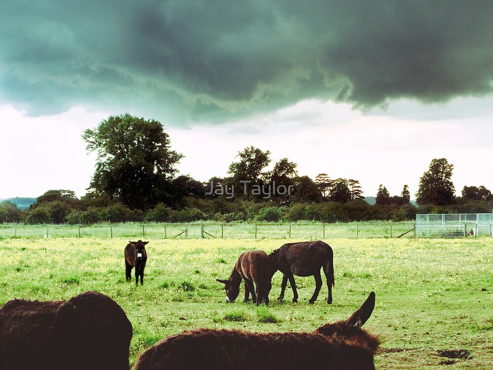 Self-Appointed Inspector of Donkeys and Rain Storms by Jay Taylor