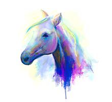 Abstract multi-coloured head horse  Photographic Print