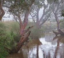 Moorabool River - Geelong by Hans Kawitzki