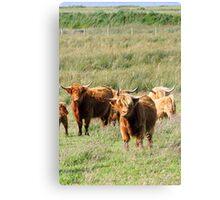 Highland Cow (Heeland Coo), Scotland Canvas Print