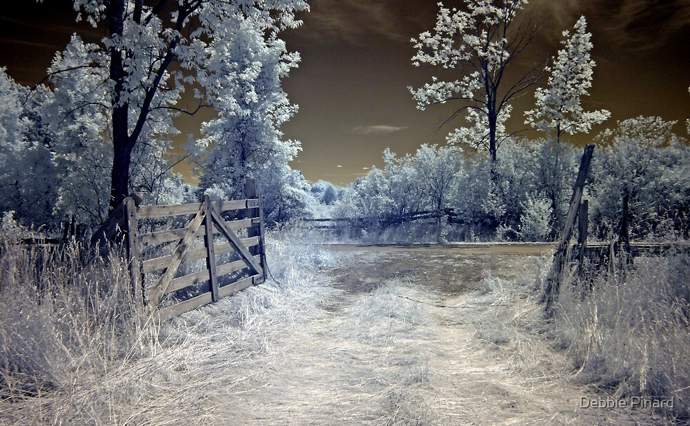Through the Gate - Infrared, Dunrobin Ontario by Debbie Pinard