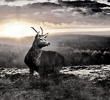 Caught In The Sunset by Darren Burroughs
