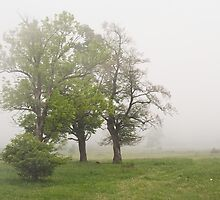Misty meadow at spring. by exvivo