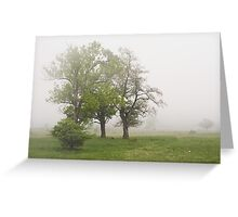 Misty meadow at spring. Greeting Card