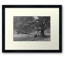 Mysterious Old beauty. Framed Print