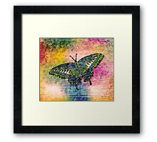 Butterfly Art Framed Print