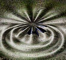 In a spin by Jan Clarke