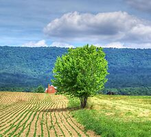 Farm Tree by James Brotherton