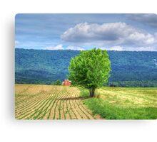 Farm Tree Canvas Print
