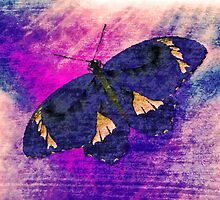 Butterfly Art 3 by Nhan Ngo