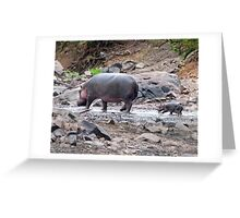 New born hippo Greeting Card