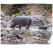 New born hippo Poster