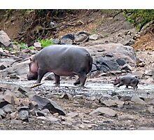 New born hippo Photographic Print