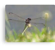 Dragonfly World Canvas Print