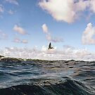Wind Swept by globeboater