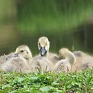 Three Goslings by Alex Call