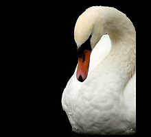 Swan Portrait.. by AlysonArtShop