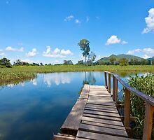 Wetland in Hong Kong by kawing921