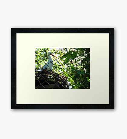 Dreaming of the Freedom to Fly Framed Print
