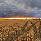 Panoramic Sunset Over Fields by Mat Robinson