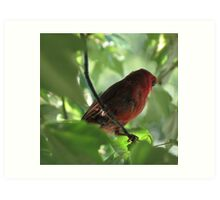 Tennessee Cardinal Art Print
