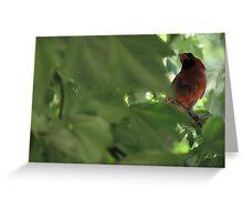 Cardinal in Maple Tree Greeting Card