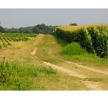 Country  Fields Photographic Print