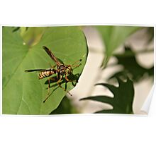 Can't a wasp get any privacy here! Poster