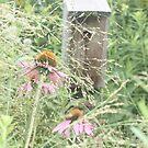 Ogdon Park Birdhouse by Karen Brewer