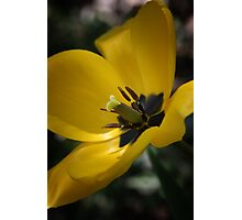 Spring Flower Photographic Print