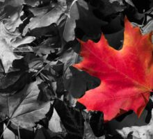 Singled Out Red Maple Leaf Sticker