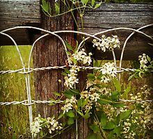Fence on Two Mile Drive by Miles Glynn