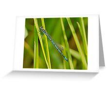 Azure Damsel Fly Greeting Card