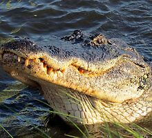 Alligator Smile by Cynthia48