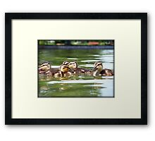 Ducklings Point Of View Framed Print