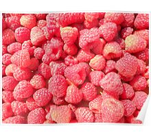Raspberry Season in Idaho Poster
