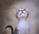 Piper by Pat Abbott