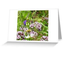 Northern brown Argus butterfly Greeting Card