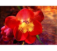 Riotous Spring Photographic Print