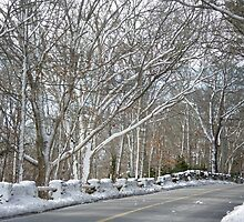 On The Road To Woods Hole by MotherNature