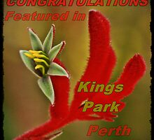 Kings Park Perth Banner by myraj