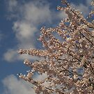 Pink Blossoms by Annie Lemay  Photography