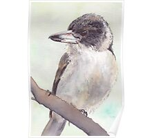 Grey Butcher Bird Poster