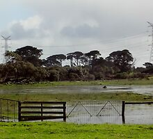 Wet & Flooded Paddock  by log0008