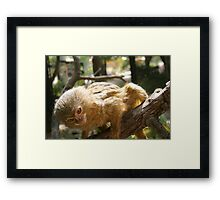 Cute little monkey Framed Print