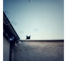 Bubble cat... Photographic Print
