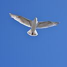 All Alone Seagull by purplesensation