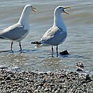 Seagulls Yelping by purplesensation